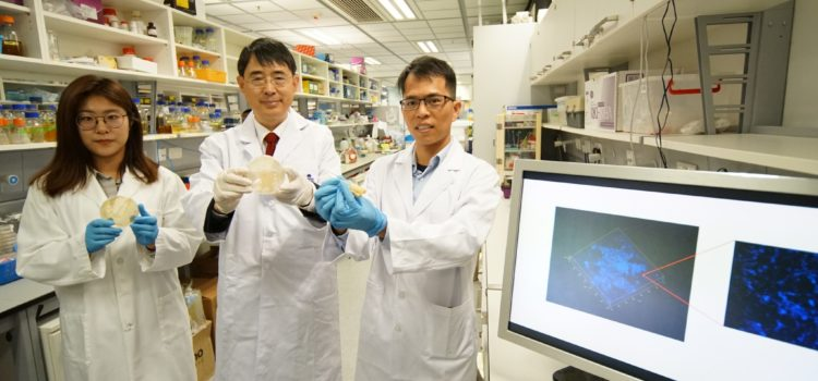 HKUST Researchers Discover More Than 7,000 New Microbial Species  Enhancing Our Understanding of Ocean Biodiversity
